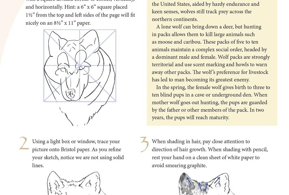 You Can Draw a Wolf Lesson