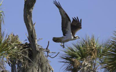 Photo: Osprey, Florida