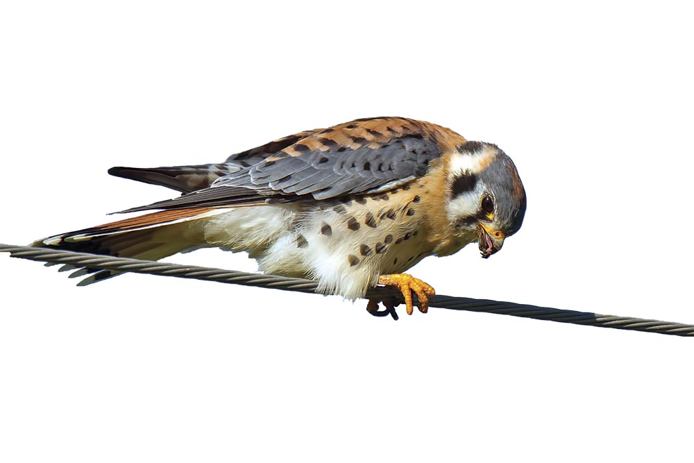 Birding Bounties