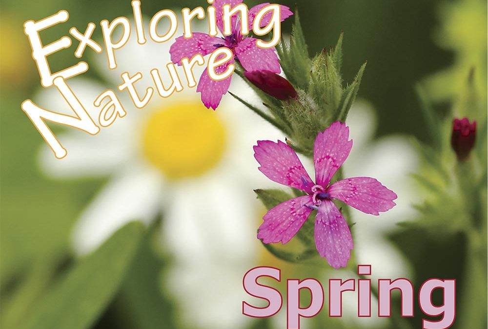 """Wildflower """"Learning By Doing"""" Contest"""