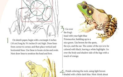 You Can Draw a Bullfrog Lesson