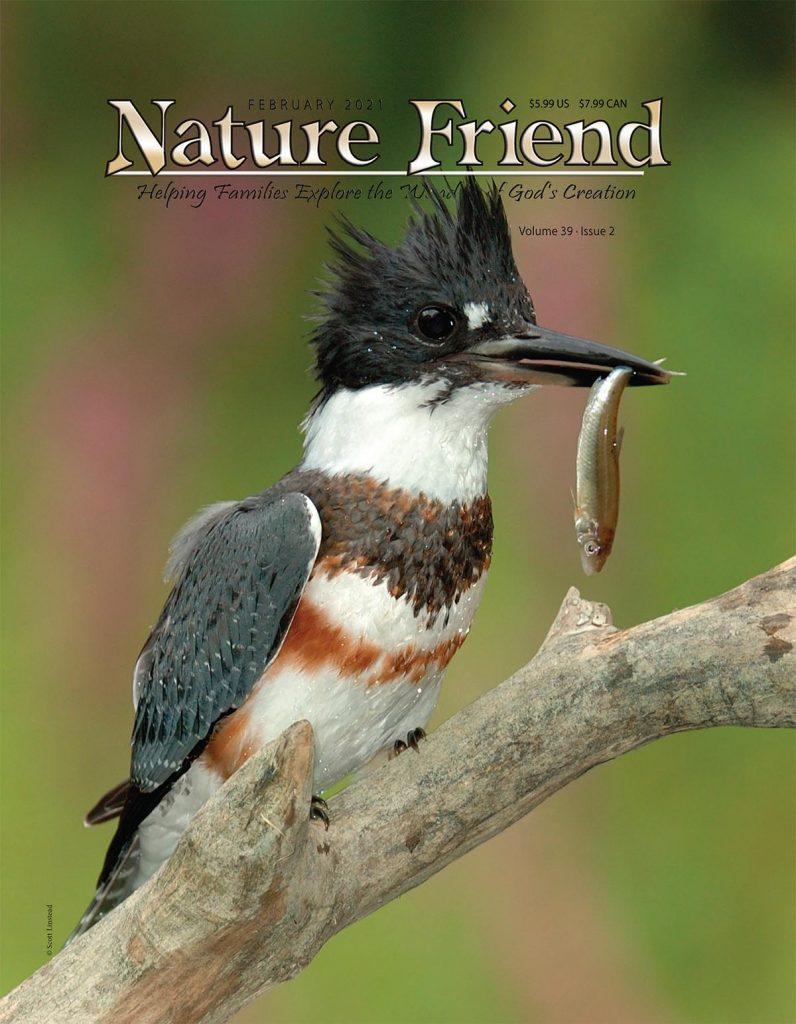 February 2021 Nature Friend magazine cover, Belted Kingfisher, Carolina Chickadees