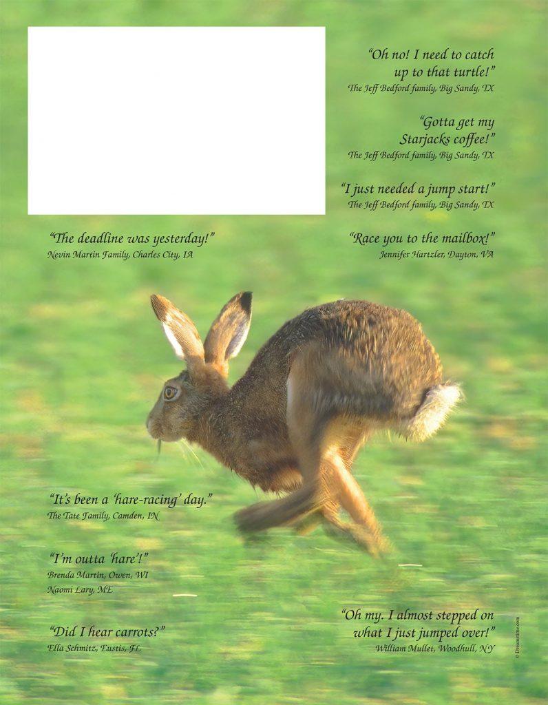 Jack Rabbit Caption This