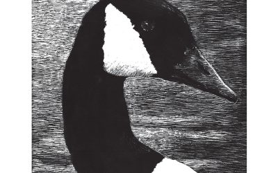 You Can Draw a Canada Goose