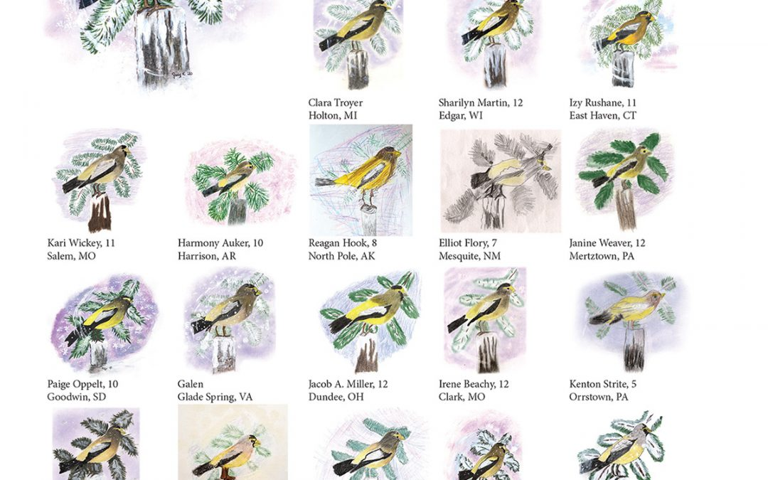 You Can Draw an Evening Grosbeak Submissions