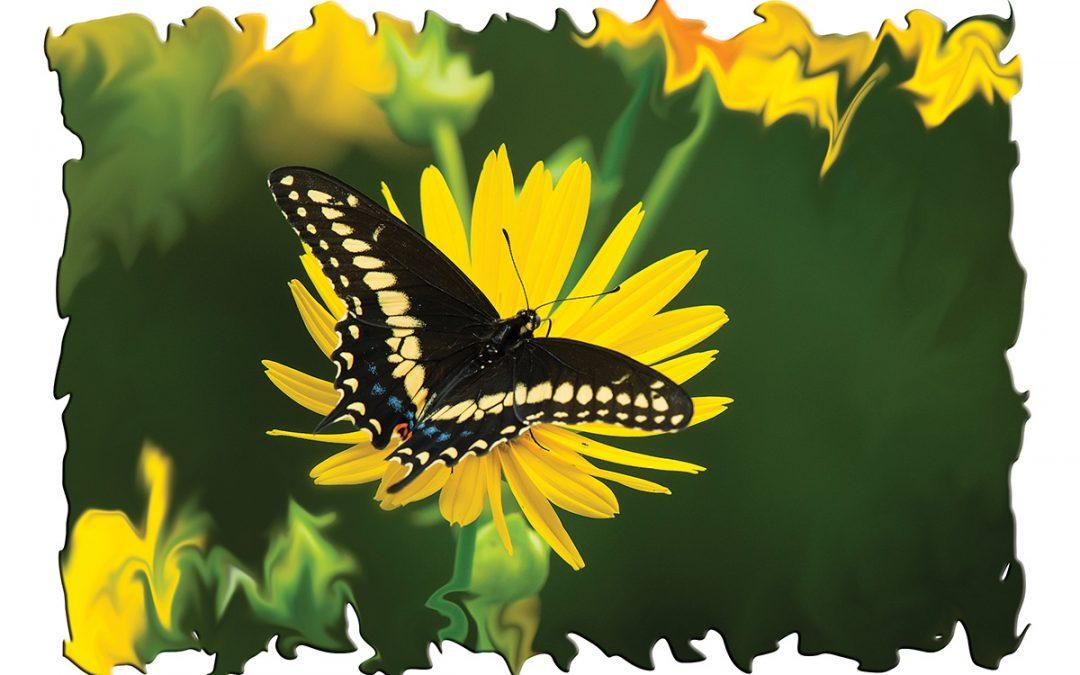 Raising Flying Flowers