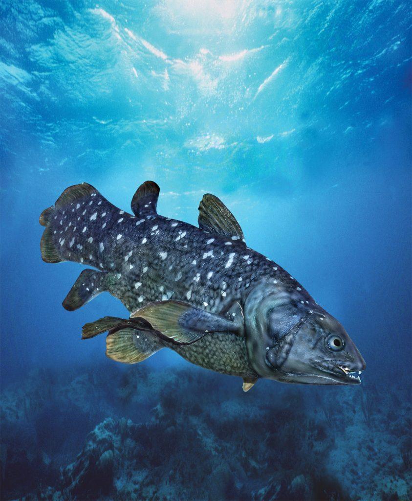 Coelacanth,
