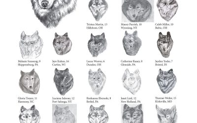 You Can Draw a Wolf Submissions