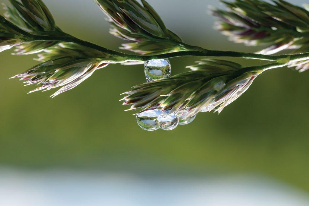 Lake refracted in droplet