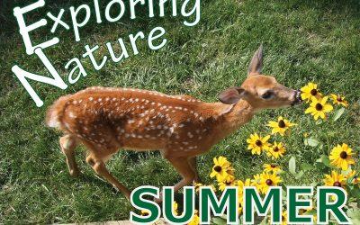 Exploring Nature, Summer