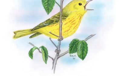 You Can Draw a Yellow Warbler