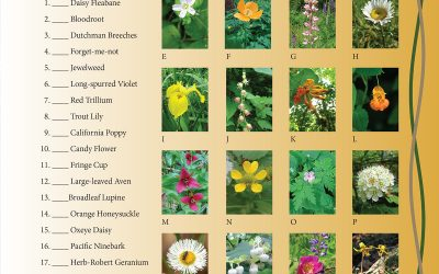 August 2021 Study Guide Wildflower Match Puzzle