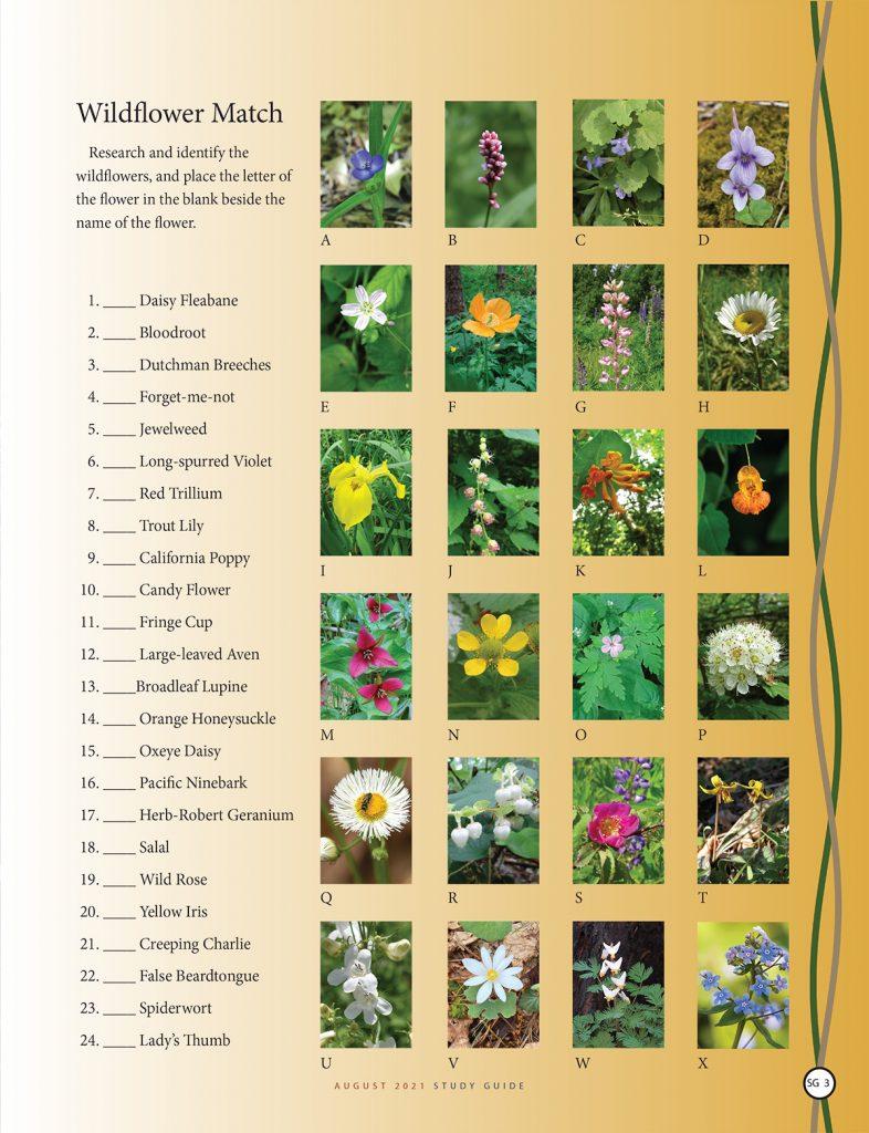 Wildflower Match Puzzle