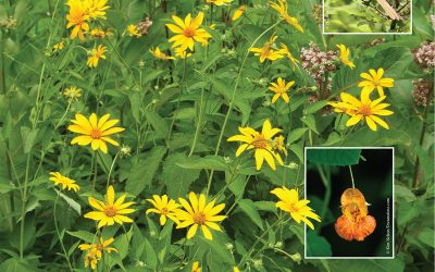 Let's Take a Hike: Wildflowers