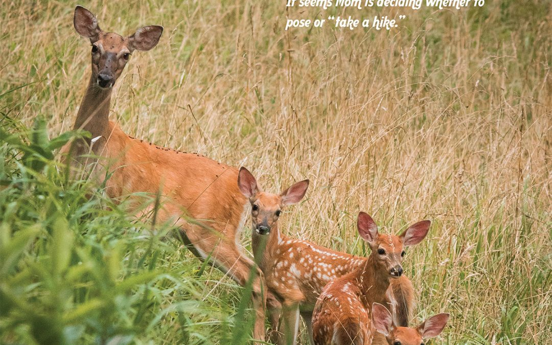 Let's Take a Hike: White-tailed doe and fawns