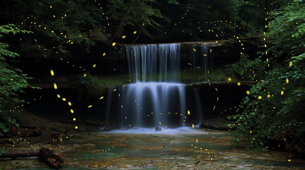 Living Lights,