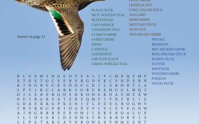 North American Ducks Word Search, September 2021