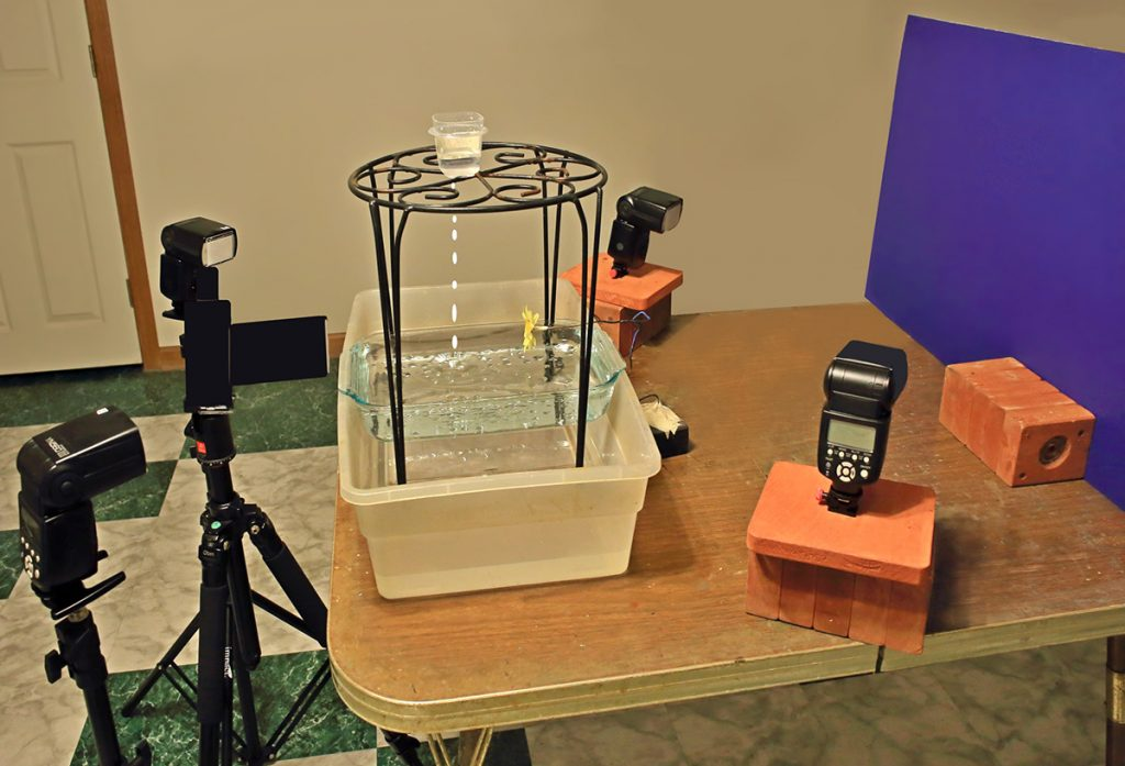 Setup for photographing flowers in water droplets